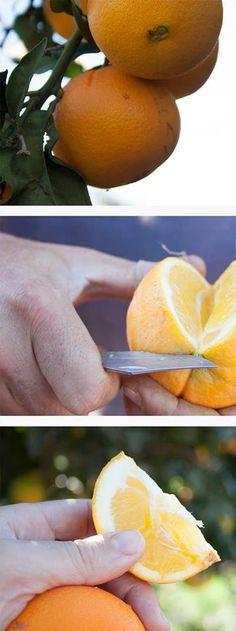 3 de noviembre. Probamos la naranja en el campo. Todavía falta un poco.