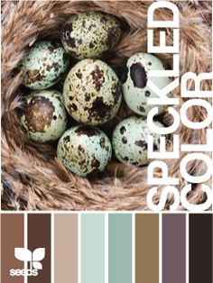 speckled color palette. add yellow and some coral for pops of color?