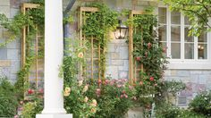 Up a wall | On a driveway, atop a doghouse, up a wall—here's how to garden in small and unusual spaces