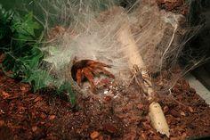 Tarantula Scrapbook, Album, Explore, World, Pets, Scrapbooking, Card Book, Exploring, Guest Books