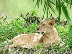 Velavadar Blackbuck National Park - in Gujarat, India
