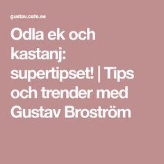 Odla ek och kastanj: supertipset! | Tips och trender med Gustav Broström