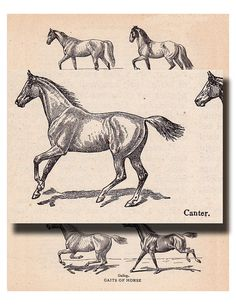 vintage horse illustration Galloping Horses 'Gaits of by ArtDeco