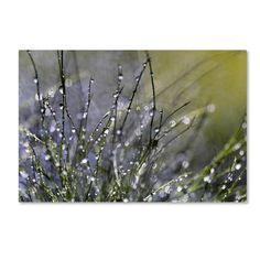"""22 in. x 32 in. """"Spring Morning"""" by Beata Czyzowska Young Printed Canvas Wall Art"""