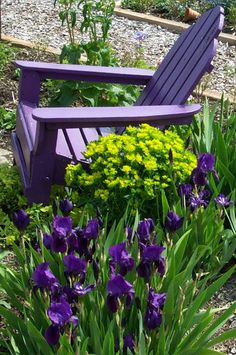 . purple chair in garden