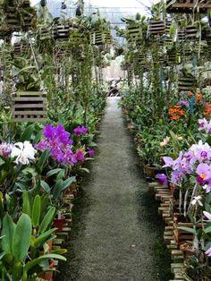 Las orquídeas cargan con una fama de difíciles y exigentes que no se corresponde estrictamente con la realidad. Simplemente se trata de plantas que son bastante diferentes a las que todos estamos a…