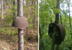Estes capacetes, provavelmente soviéticos, podem ter caído durante um tiroteio quando as árvores eram apenas mudas