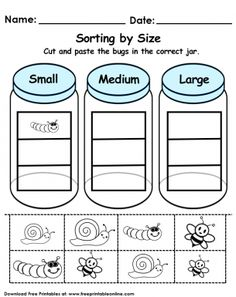 Sorting by Size Worksheet