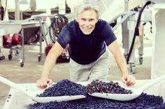 Mike Benziger showing the difference between using the optical sorter during harvest, Benziger Family Winery.