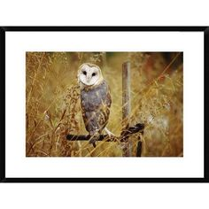 Global Gallery Barn Owl Perching among Dry Grasses, British Columbia, Canada by Tim Fitzharris Framed Photographic Print Size: