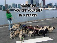 Funny Pug Dog Meme LOL More