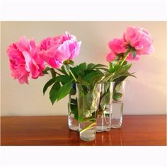 The subject: fresh peonies from the garden in an Alvar Aalto vase.