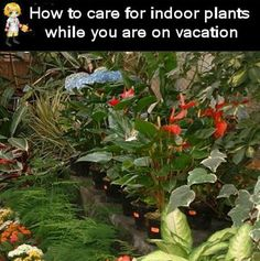Houseplants and Vacations