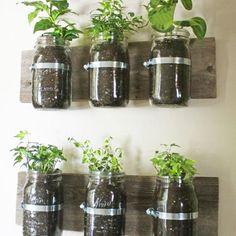 Plantes aromatiques dans des Mason Jar