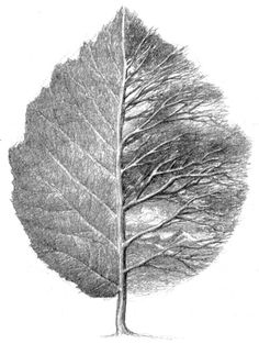 """This is Alan Lee's illustration in the end of 'Leaf By Niggle' """"He was the sort… Alan Lee, Leaf Drawing, Painting & Drawing, Tolkien, Painted Leaves, Leaf Art, Botanical Art, Tree Art, Graphic"""