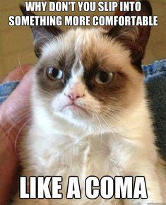 Oh grumpy cat.