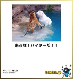 ウケるw Animals And Pets, Funny Animals, Cute Animals, Funny Photos, Funny Images, Funny Cute, Hilarious, Japanese Funny, Smiles And Laughs