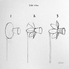 Korean Artist Uploads Step By Step Tutorials On How To Draw Beautiful Flowers If you've ever dreamed of becoming a world-class artist, an illustrator or simply wanted to improve your drawing skills, then you're in luck. Rose Drawing Simple, Simple Flower Drawing, Flower Drawing Tutorials, Art Tutorials, Flower Art, Daffodil Flower, Flower Step By Step, Step By Step Drawing, How To Draw Flowers Step By Step