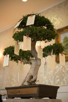 Tableau Bonsai tree 🌲 #bombonierabonsai #annapaolanapoli #centrobonsaiiodice #weddingplanner @annapaolanapoli
