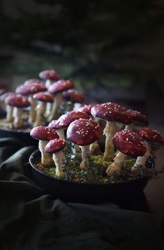 I absolutely love the mysterious amanita mushrooms that pop up in dark woods in the fall and winter. This dessert is dedicated to them: grown-up crisp rice treats with whiskey, chocolate, and help hearts form the base (with a dusting of pistachio \ Matcha, Macarons, Mint Cheesecake, Spooky Food, Log Cake, Good Food, Yummy Food, Savoury Cake, Confectionery