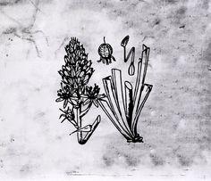 Asfodelus