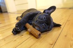 Sundays are for sleep ins with my Stick, French Bulldog Puppy ❤️
