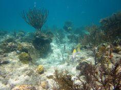 Underwater scenery, Trunk Bay, Sept 2014