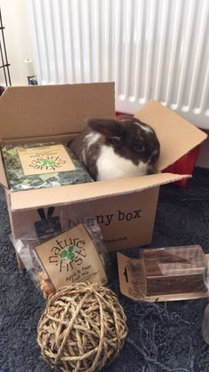 This little guy is loving his box! Its so cute when the #bunnies hop in the boxes! Subscribe for your #bunny today!