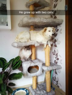 Dog thinks he's a cat.