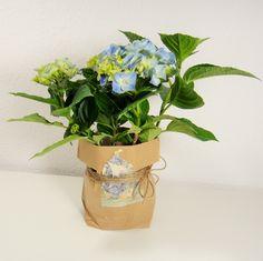 Blumentopf in Papiertüte - wunderhübsches Mitbringsel, wenn man bei Freunden zum Essen oder bei der Oma zum Kaffee eingeladen ist.