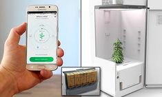 LEAF has designed a refrigerator that grows marijuana. Users just plant the seeds and the system does everything from monitoring temperature to feeding plants with nutrients from cartridges. Marijuana Plants, Cannabis Plant, Grow Boxes, Grow Tent, Growing Plants, Keurig, Hydroponics, Gardening, Ganja