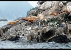 Far North Escape, Seward, Alaska----sEAL NaP tIME