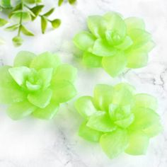 Handmade Succulent Soaps for sensitive skin. Soap for sale by Tailored Soap