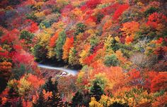 Driving along Mount Washington Road in New Hampshire. I love Fall in New England and love living in New Hampshire. New England States, New England Fall, Indian Summer, Autumn Scenery, Autumn Trees, Fall Pictures, Fall Photos, Road Trip Usa, New Hampshire