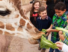 Locally recognized as the Best Place to Take the Kiddos, the El Paso Zoo sits on 35 acres of fun and adventure. Bigger and better than ever, the El Pa...