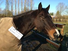 5. I ate my friend's blanket. It was new. | EquiSearch