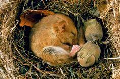 Letargo: tutti i segreti e i misteri del sonno degli animali - Focus.it