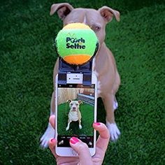 Pooch Selfies Dog Selfies Camera Stick Ball Attachment Selfie Stick for Pet Dog Selfie, Selfie Stick, Pitbull, Galaxy Smartphone, Clever Dog, Best Selfies, Perfect Selfie, Photo Printer, Cool Inventions
