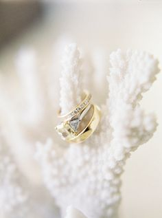 Gallery & Inspiration | Tag - Rings | Picture - 1139555