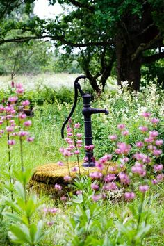 Beautiful wildflower garden surrounding old water pump...