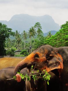 Pinnawala Elephant Sanctuary, Sri Lanka