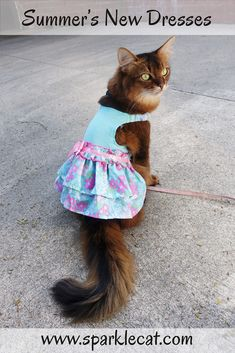I got a couple of new dresses, and here I am modeling them! #cat #catdress #catstyle #kitty #prettycat