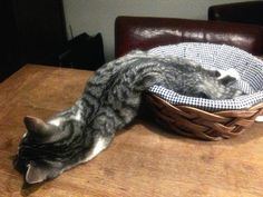 31 Marvelous Cats Who Truly Define Sophistication