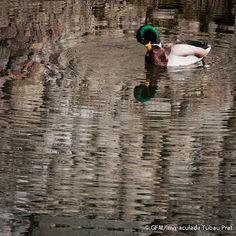 I aquest en Narcís que s'enmiralla al http://www.fotodiari.cat/?p=619#comment-344 del @gfmanlleu