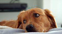 Estudo revela que cães que brincam pouco se tornam mais ansiosos e agressivos