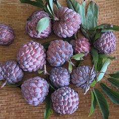 Sugar Apple  While called an apple, this fruit looks more like a raspberry because of it's lumpy outer shell. Inside, sugar apples have a sweet yellowish flesh that has the texture and taste of custard. In fact, another name for the sugar apple is custard apple. This fruit is popular in Southern Asia, although it is native to the Americas. Growers in Taiwan combined it with a cherimoya to make the atemoya.