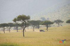 Wildlife Photography Course in the Masai Mara in Kenya.