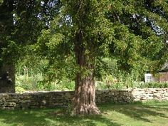 Cools Farm Bed and Breakfast, Wiltshire. Under the yew tree http://www.organicholidays.com/at/2302.htm