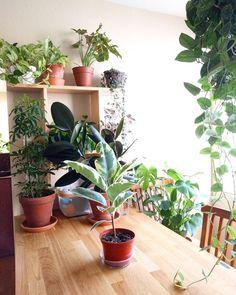 #urbanjunglebloggers #plantshelfie