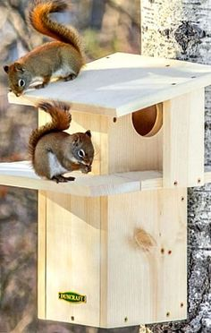 Duncraft Squirrel Den - Watch squirrels scamper up the built-in ladder to lounge on the two-sided sun porch because squirrels love to soak up the sun!